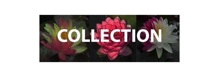Nymphéas : La Collection