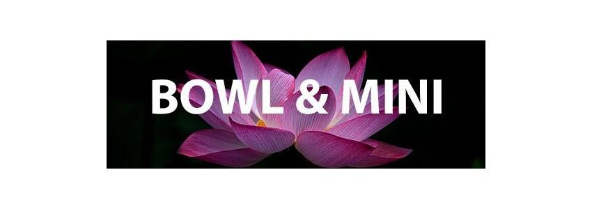 Lotus miniatures et bawl lotus