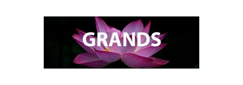 Grands lotus